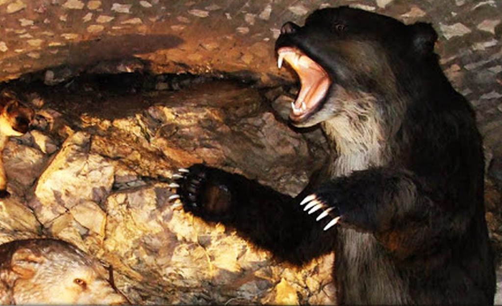 jaskinia-niedzwiedzia